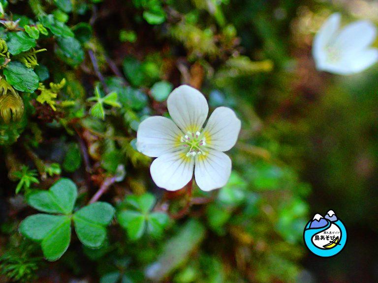 屋久島の花(植物)