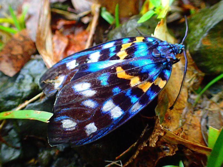 美しい蛾!?