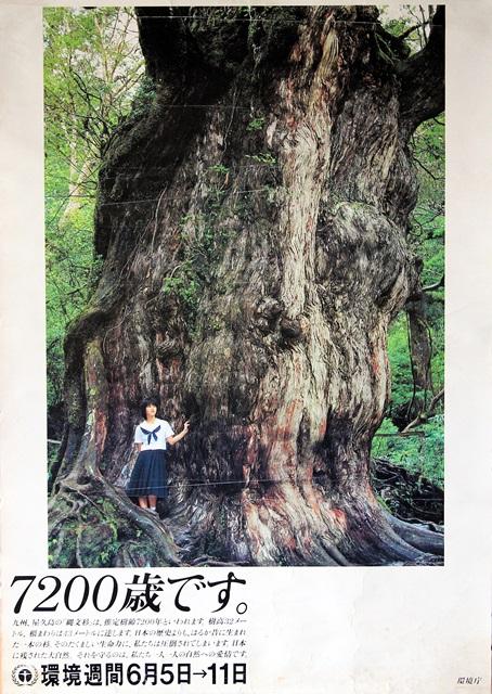 縄文杉 モデル