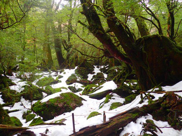 冬 白谷雲水峡 苔むす森 もののけ姫の森
