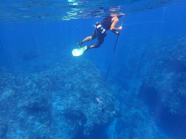 海サップ シュノーケリング 素潜り
